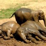 lazy_elephants